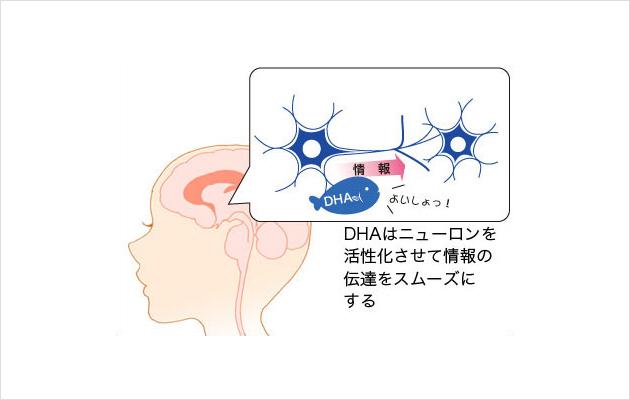 DHA(ドコサヘキサエン酸) | 成分情報 | わかさの秘密